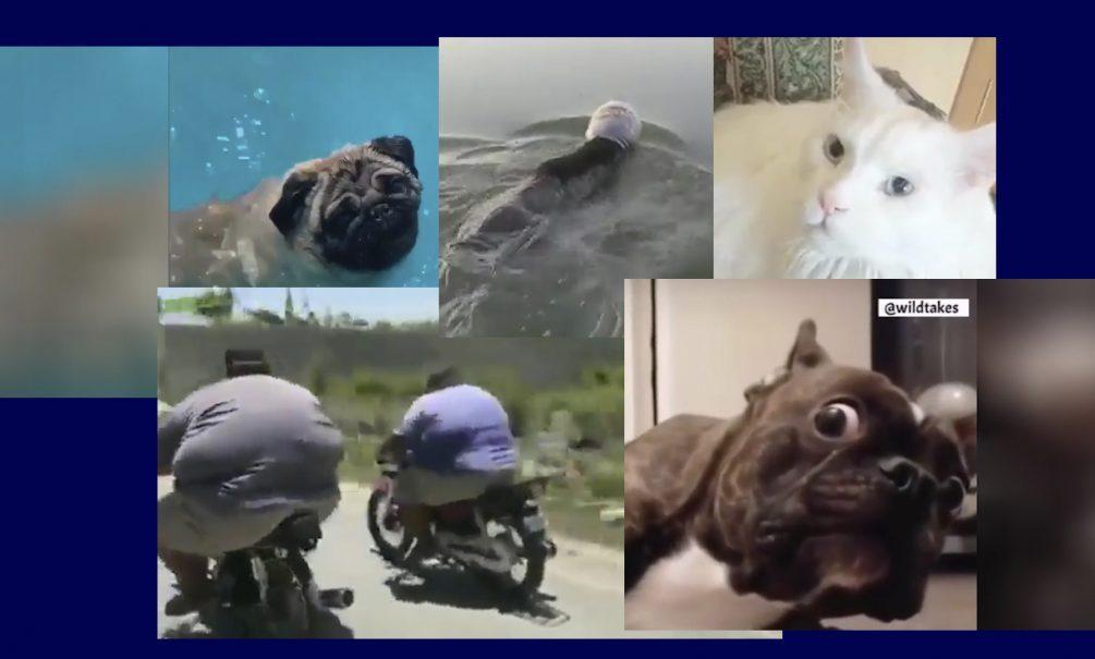 Самые интересные видео 29 июня