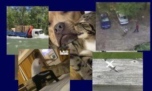 Самые интересные видео 7 июля