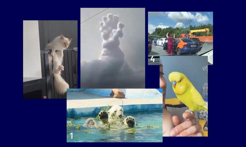 Самые интересные видео 27 июля