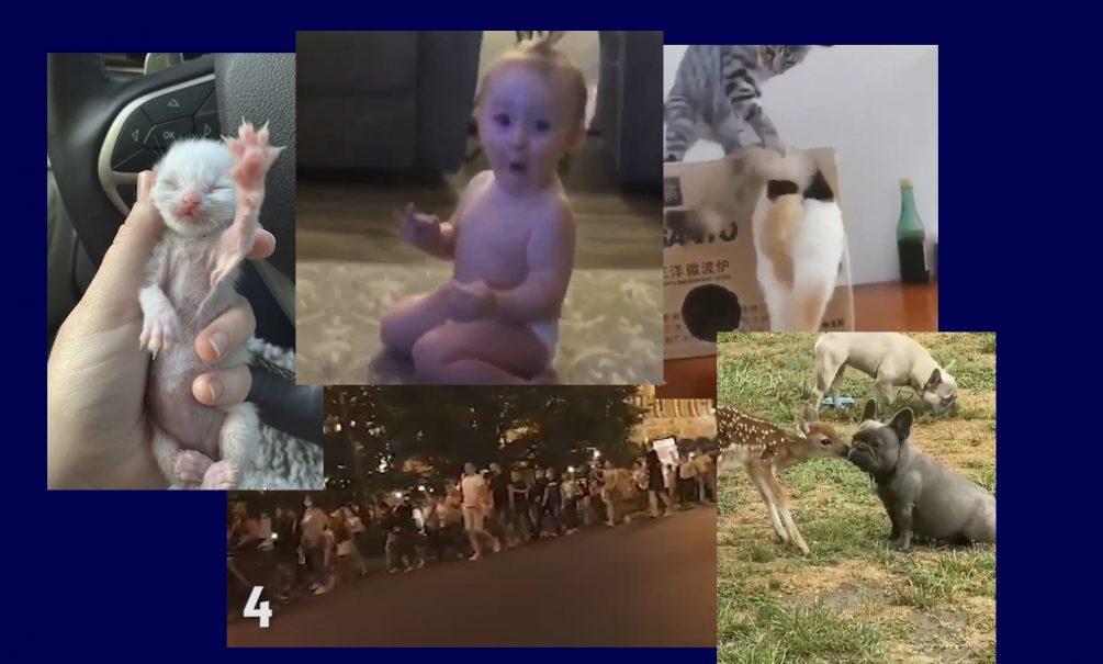 Самые интересные видео 12 июля