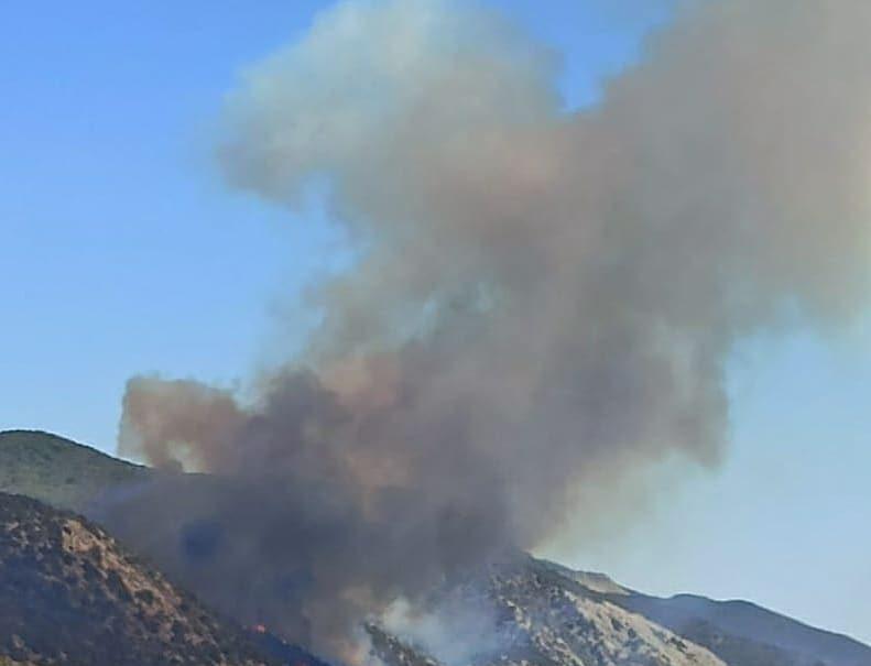 Пожар под Анапой уничтожил сотню гектаров реликтового леса
