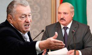 «Давно не девственница»: Жириновский сказал, что из себя сегодня представляет Лукашенко