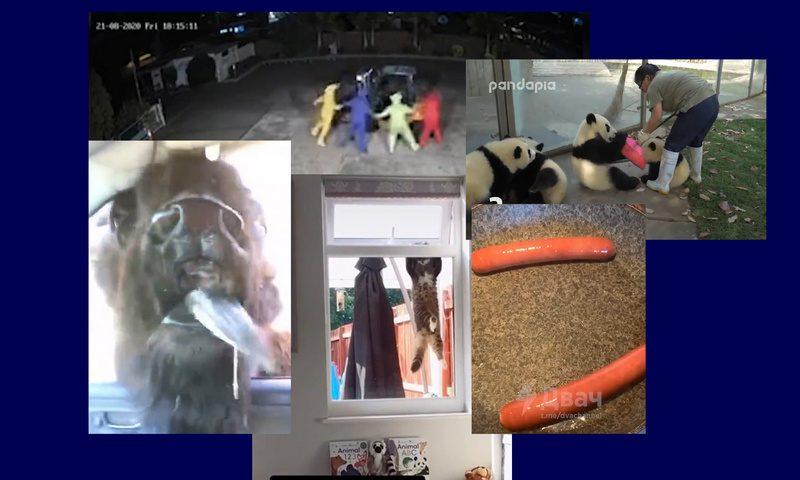 Самые интересные видео 24 августа