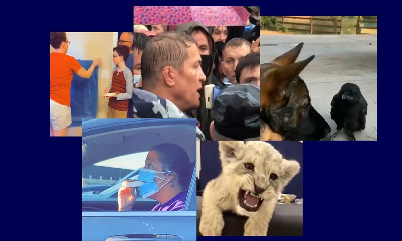 Самые интересные видео 16 августа