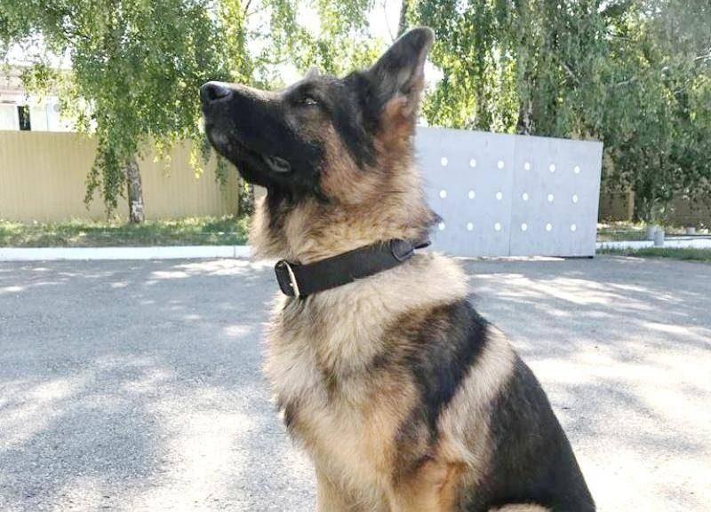 На Ставрополье служебный пес Комбат вычислил угонщика автомобилей
