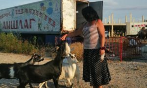 Передвижной цирк из Воронежа попал в «ковидный капкан» на Ставрополье