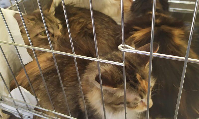 Чудом выжившие: в Ессентуках кошки два года были заперты в квартире без хозяйки