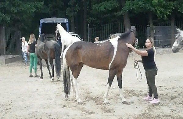 Ростовчанка и ее дочь жестко издевались над лошадьми