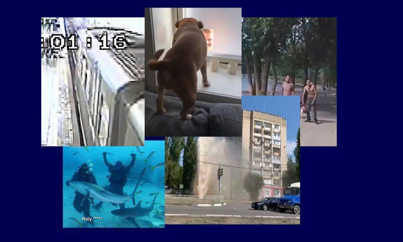 Самые интересные видео 17 августа