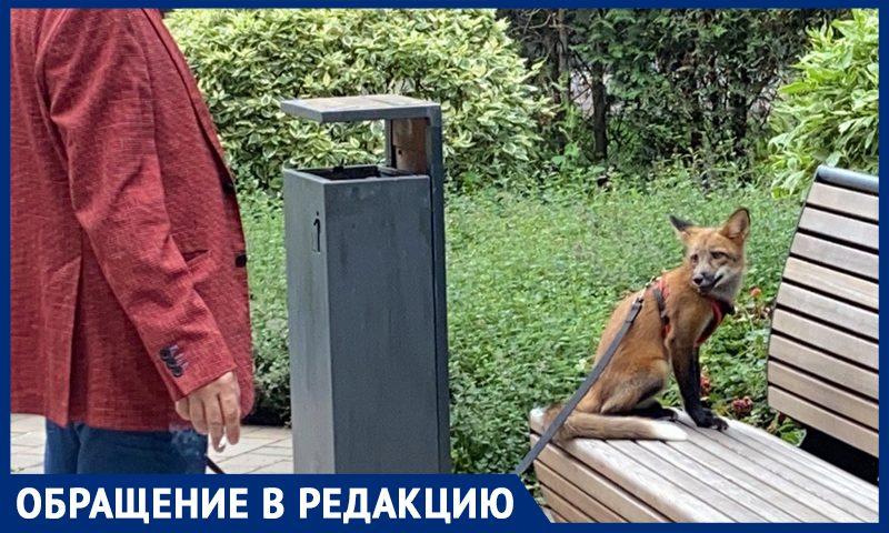 В Москве на поводке выгуливают лис и свиней