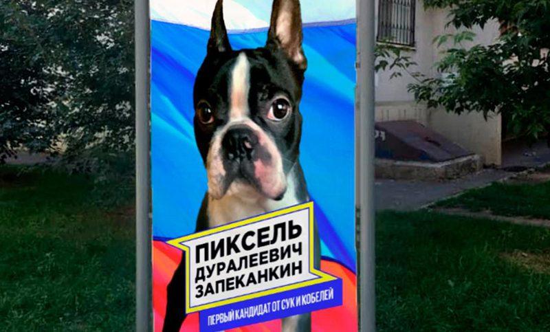 В депутаты городской думы Ростова выдвигается пёс