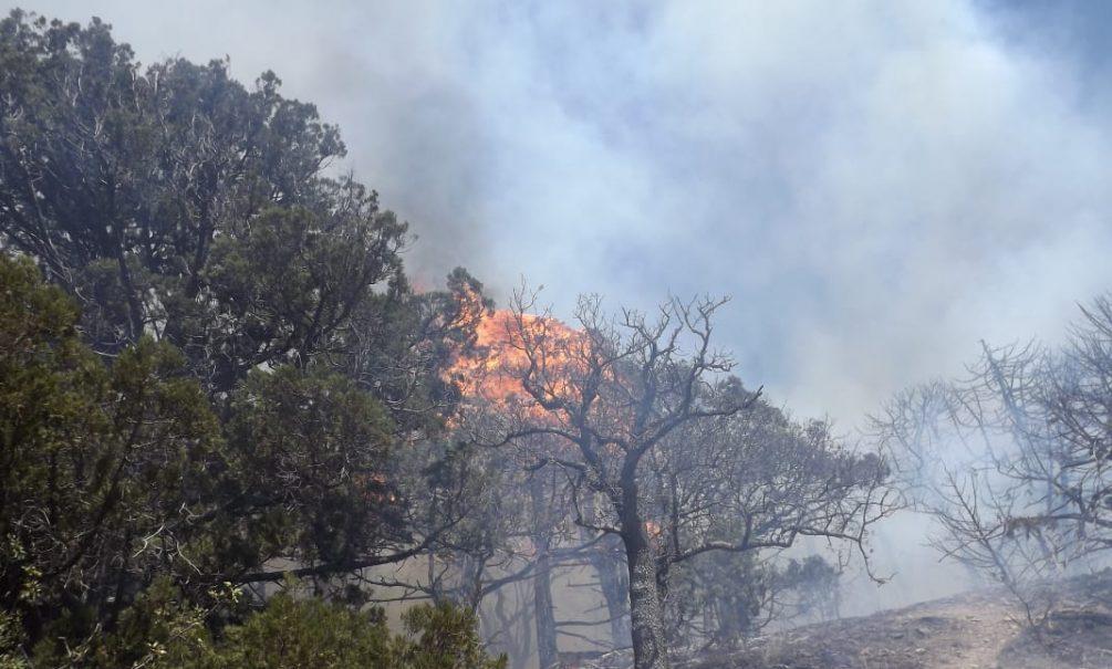 Что осталось после катастрофического пожара на Утрише