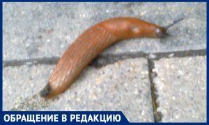 Гигантские ядовитые слизни заполоняют центр Москвы