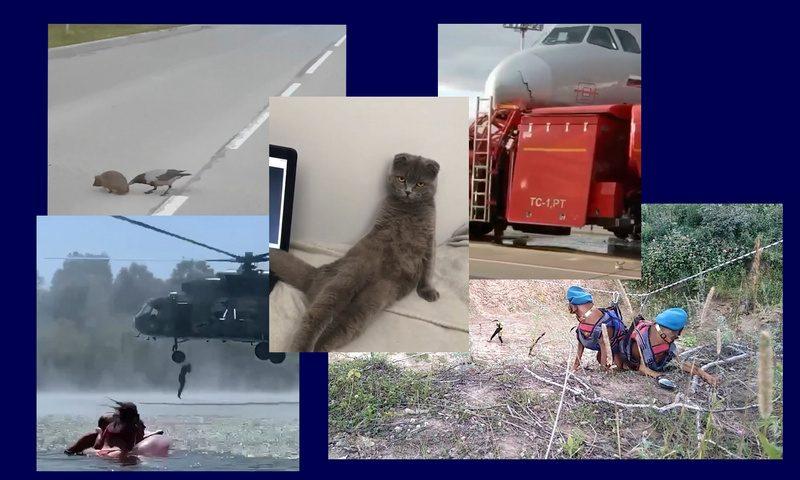 Самые интересные видео 1 августа