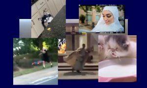 Самые интересные видео 5 августа