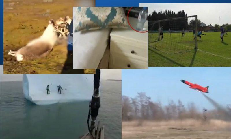 Самые интересные видео дня 17 августа