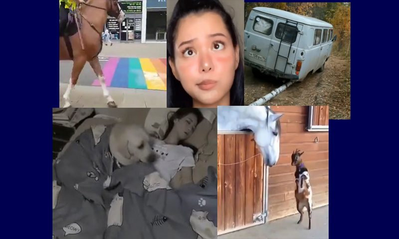 Самые интересные видео 7 сентября