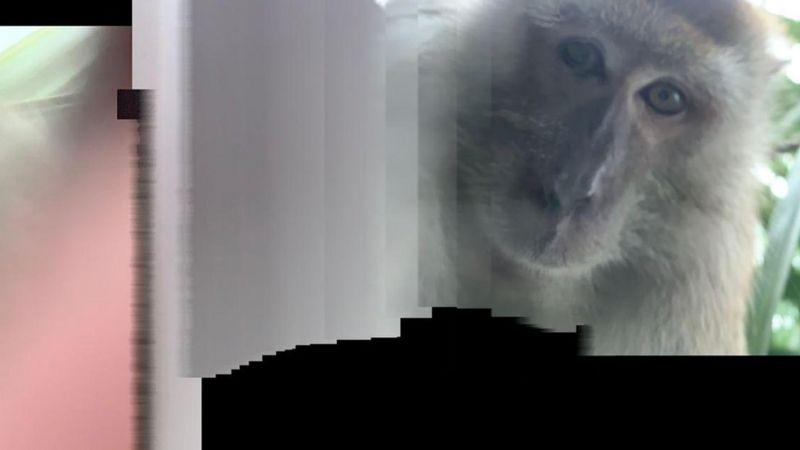 Малазийец нашел в джунглях свой телефон с кучей обезьяньих селфи