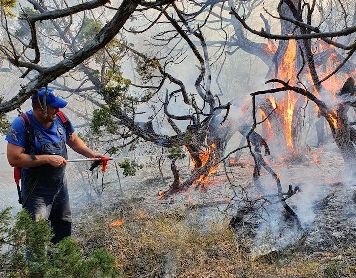 Кто виновен в пожаре в «Утрише» – туристы или поджигатели?