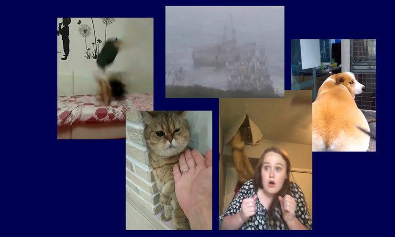 Самые интересные видео 3 сентября