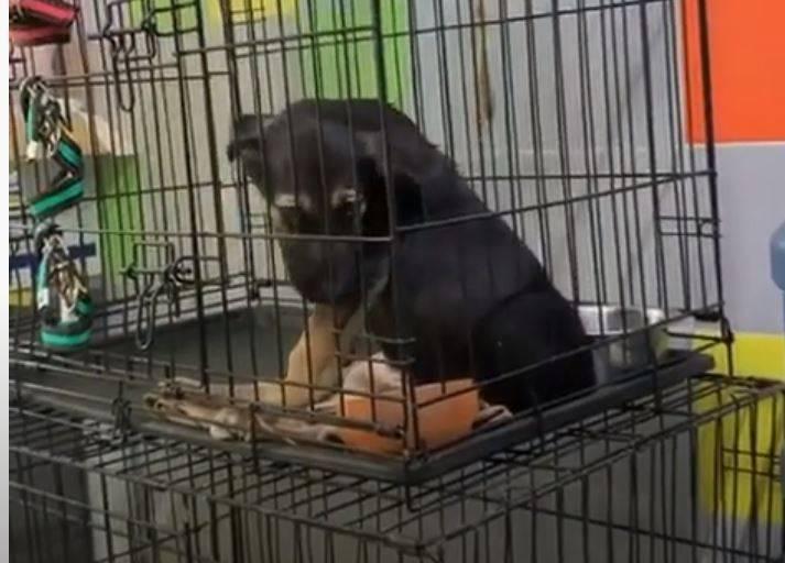 В Волгограде дети-садисты жестоко избили щенка