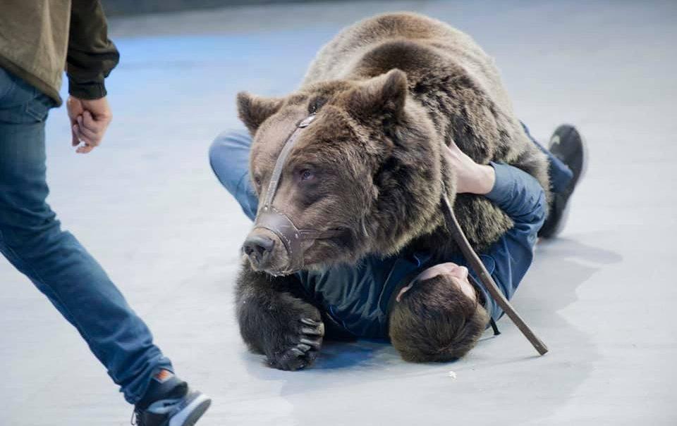 В Большом Московском цирке медведь убил уборщика, прокусив ему голову