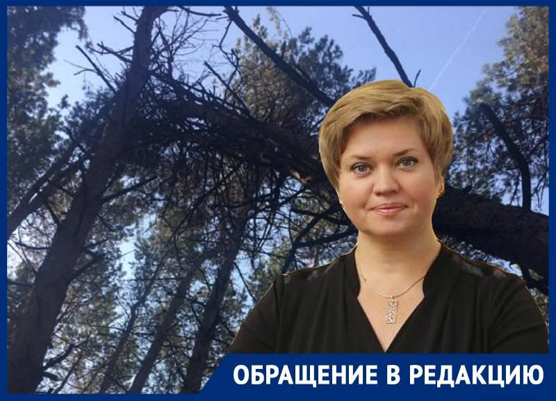 Чиновники хитрым способом сняли с себя вину за рухнувшее в лесу на воронежца дерево