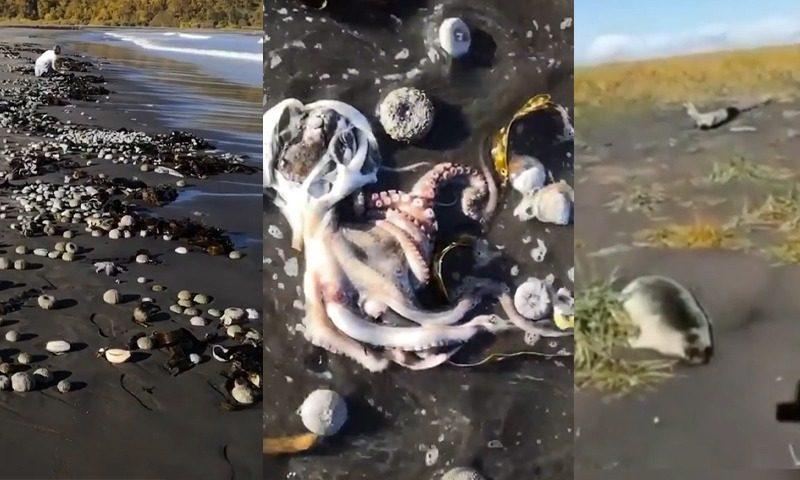 Ученые из РАН считают водоросли основной причиной экологической катастрофы на Камчатке