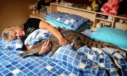 «Гоше холодно, нужно в Сочи»: бывший зек просит полицию отпустить его с крокодилом на юг