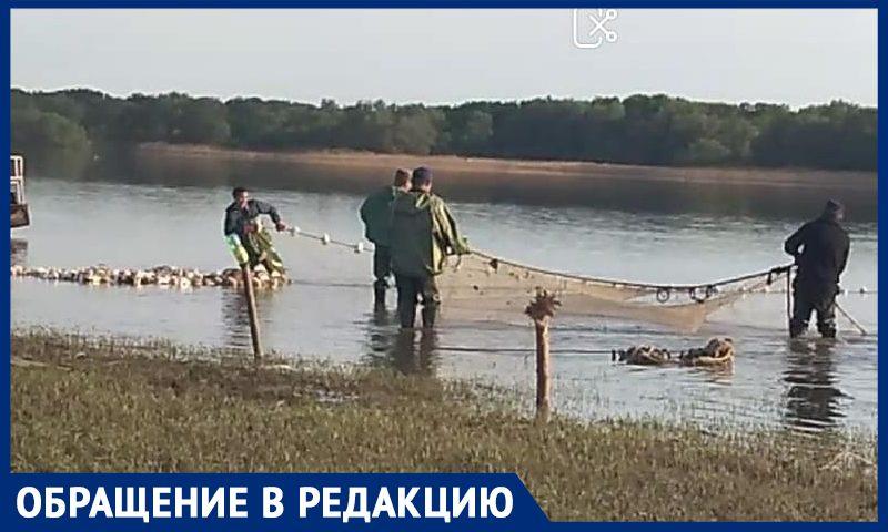 """""""90-е прошли, а методы остались"""": рыболов рассказал, как браконьеров прикрывают силовики"""