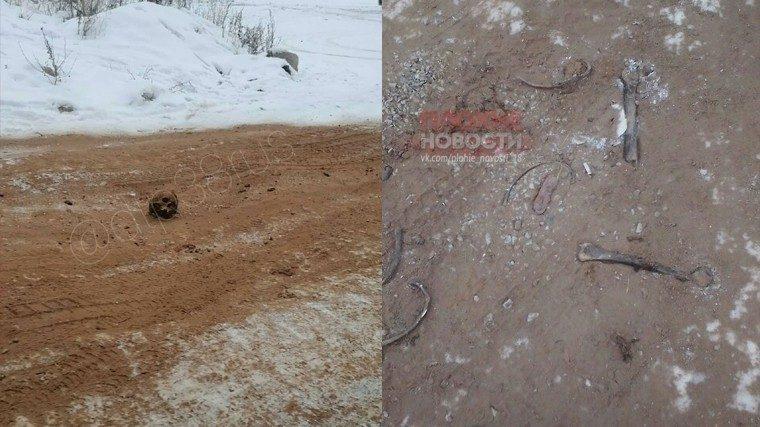 Черепом по гололеду: иркутские коммунальщики посыпали дорогу человеческими костями