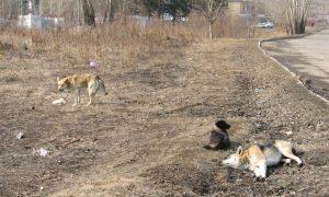 Собачий концлагерь: в Артемовске живодеры истребляют животных за бюджетные деньги