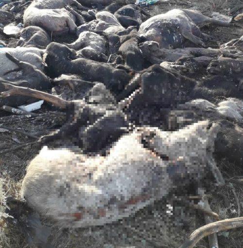 «Горы мусора и мертвый скот»: люди показали стихийные свалки в окрестностях Волгодонска