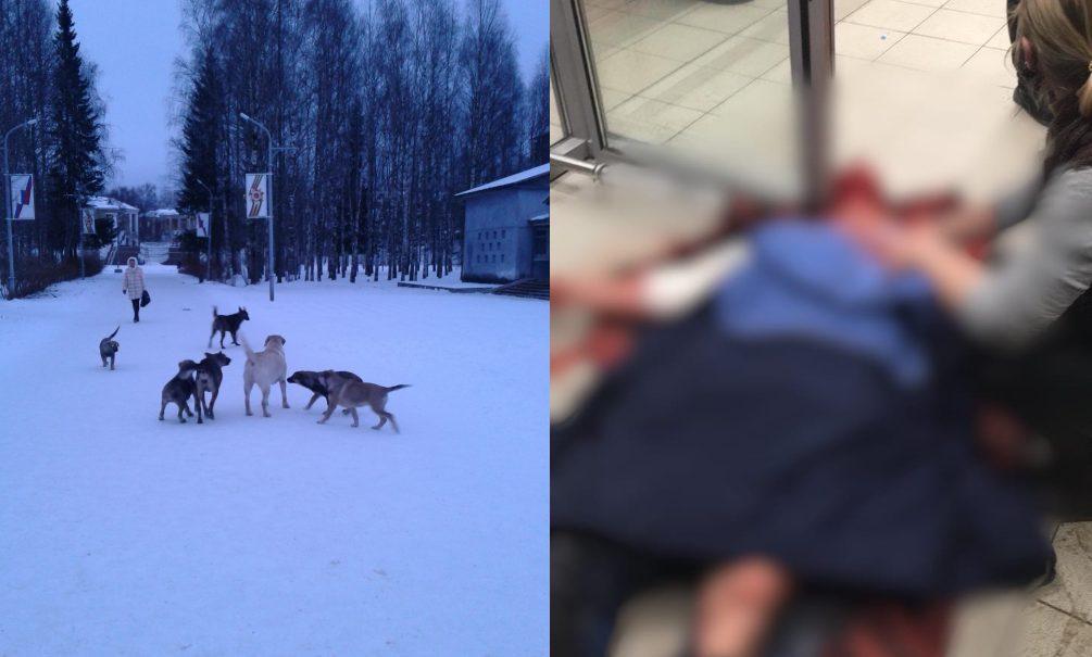 В нижнем белье, обглодана до костей: в Ухте бродячие собаки загрызли женщину и едва не растерзали мужчину