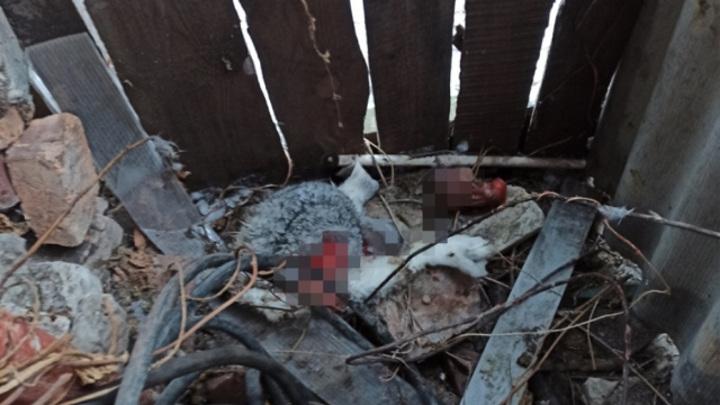 «Это же чупакабра»: в Сызрани неведомый монстр рвет кроликов на части и пьет кровь