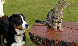Ученые объяснили, почему кошки кажутся глупее собак, хотя на самом деле все наоборот