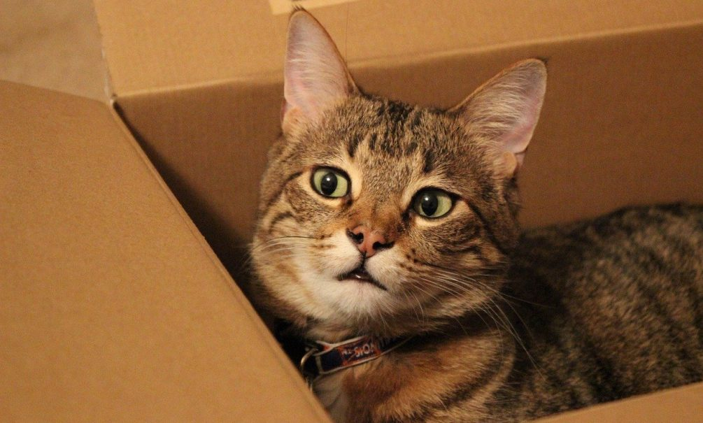 Секрет раскрыт: зоопсихолог рассказала, почему котики так любят коробки