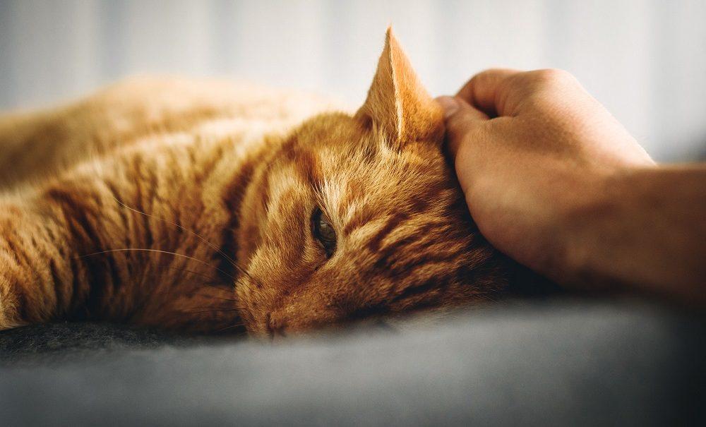 Сайт знакомств Mamba и Teddy Food помогут брошенным котикам