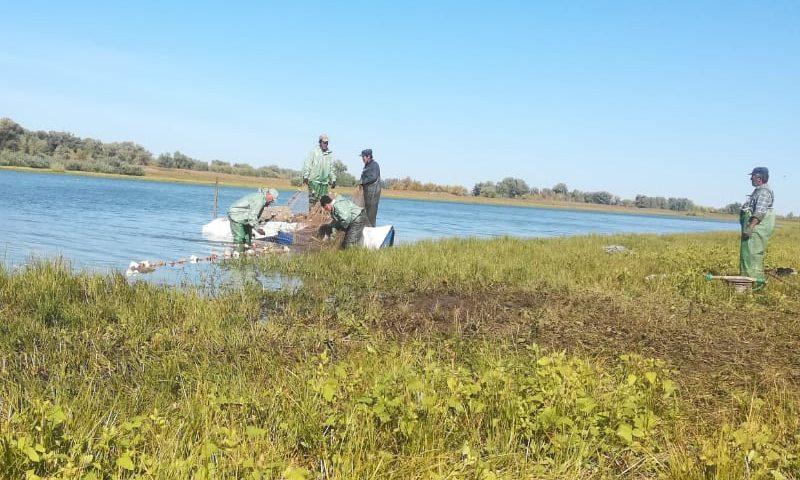 Признаки масштабной коррупции рыбохраны и чиновников Астраханской области: «Кошмарят всех, кто не платит»