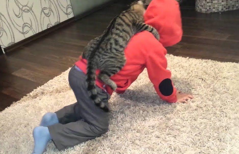 Отзывается на «кис-кис»: в Подмосковье нашли девочку, воспитанную уличными кошками