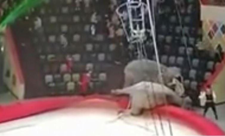 Опубликовано видео слонового побоища в казанском цирке