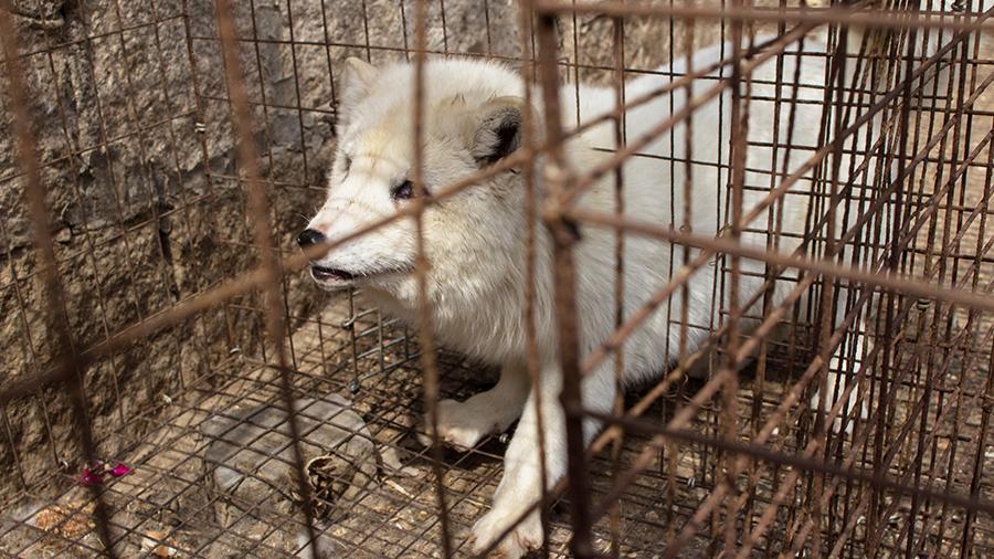 Для новых «смертоносных пандемий»: в Китае обнаружили «вирусные фабрики» с животными