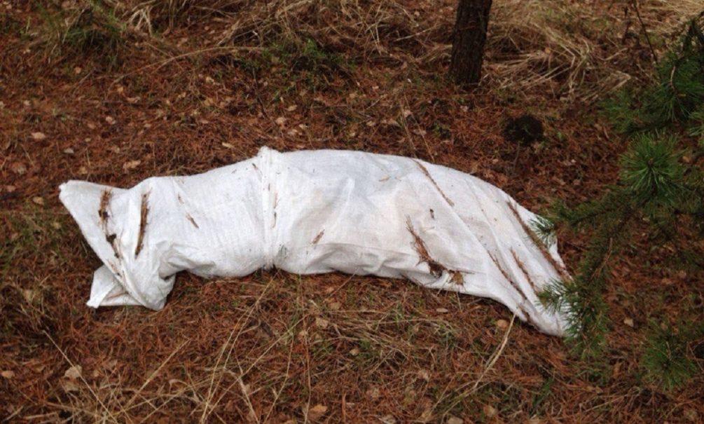 «Объявился маньяк»: омские подростки нашли за школой расчлененный труп