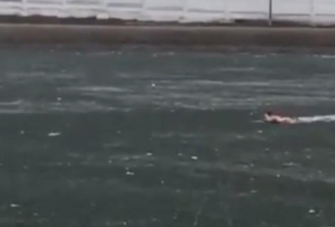 В Москве мужчина утонул, пытаясь спасти собаку