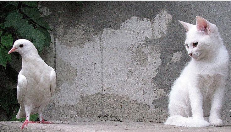 На Кубани мужчина распял на кресте котенка и голубя, чтобы запугать бывшую жену