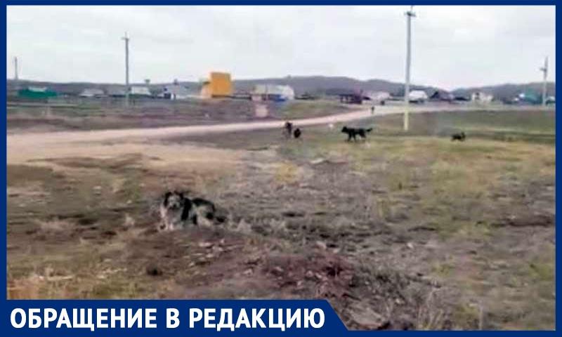 «Собирали по частям — руки, ноги, полчерепа»: в Башкирии собаки растерзали мальчика и «бегают дальше», рассказала местная жительница