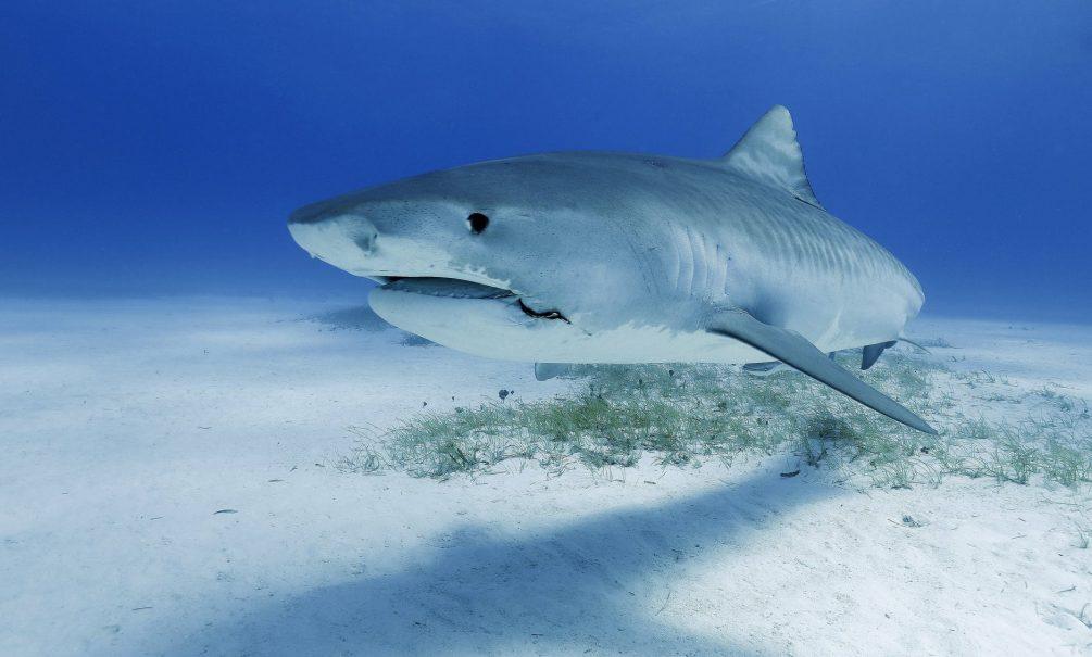 В океанариуме Анапы из-за взбешенного туриста умерла акула