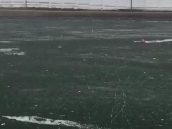 На видео попало, как мужчина ценой своей жизни спас собаку