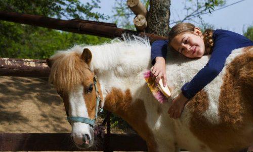 Многие активисты выступали за то, чтобы передать конный клуб детям, страдающим ДЦП. Но чиновники решили иначе - они снесли конюшни бульдозерами