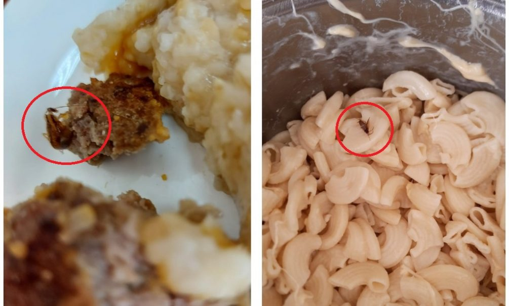 В детском саду Ростова-на-Дону малышам подавали котлеты с тараканами